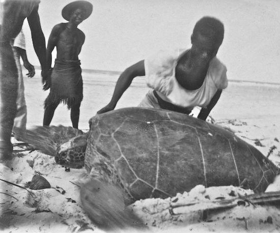 Local folk and an unfortunate female turtle