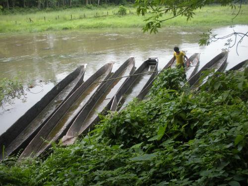 Chitwan canoes